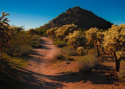 Dirt Road Through the Cholla