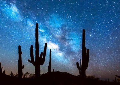 Suguaro Cactus Under a Starry Sky