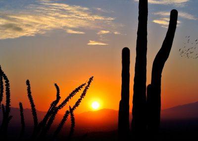 Sunset Through the Cactus