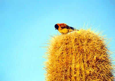 Bird on a Cactus
