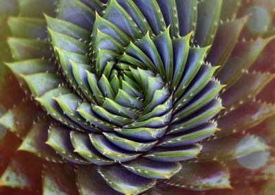 Swirling Succulent